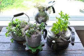 01-unique-herb-garden-in-old-kettles-0590_1