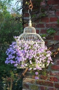 This is what I want my cage to look like, full of colourful flowers. Image source: https://www.pinterest.com/pin/173036810654933343/