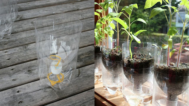 This is the self sustaining planter.  Image source: http://lifehacker.com/5913914/turn-a-soda-bottle-into-a-worry-free-self-watering-planter