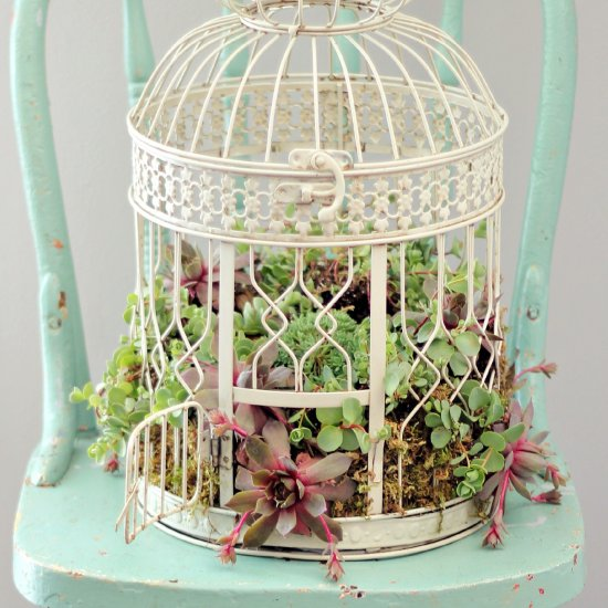 A beautiful white birdcage serves as the perfect canvas to show off these colourful succulents Image source: http://craftgawker.com/post/2014/05/13/65204/
