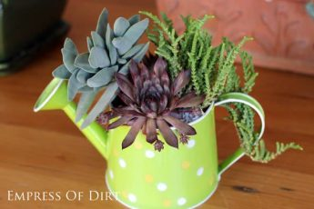 a-Succulent-watering-can-E