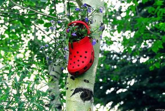 Yes even crocs can be used! Look at this one nailed to a tree :P The combination of red crocs with blue flowers is very smart. Image source: http://www.curbly.com/users/mollymc/posts/13691-roundup-7-creative-upcycled-planter-ideas