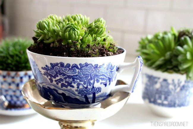 The combination of white and indigo blue pottery and the bright green plant is beautiful! Image source: http://theinspiredroom.net/2013/03/11/indoor-house-plants/