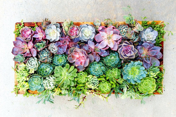 A delightful arrangement of multi-coloured beautiful succulents http://weheartit.com/entry/group/22458970