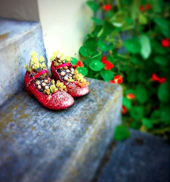 Little girl shoes, pink and sparkly! Perfect for these flowers :-) Image source: https://plantinghappinessblog.files.wordpress.com/2013/04/planting-happiness-urban-gardening-2013-plants-in-baby-shoes.jpg?w=611