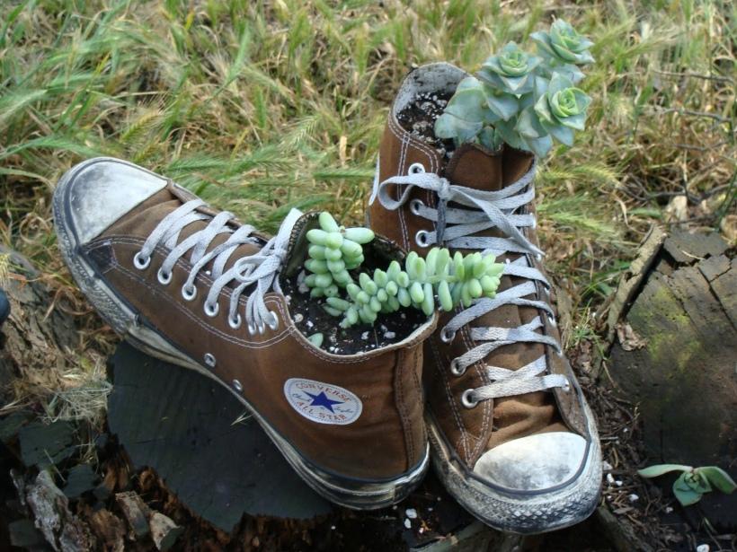 Running shoes with succulents Image source: https://sustainabilityatspu.files.wordpress.com/2014/05/shoe-planter.jpg
