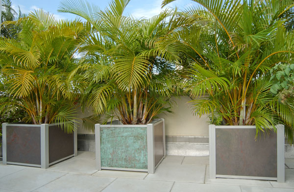 Look at these gorgeous palms http://planterblog.com/blog/?tag=concrete-planters