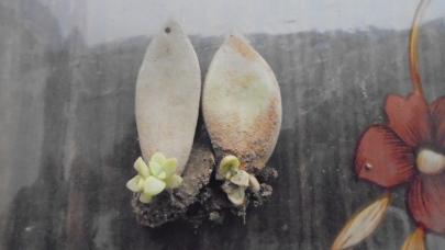Tiny plants on leaves